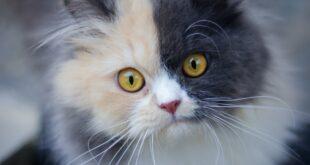 Free Cat Image